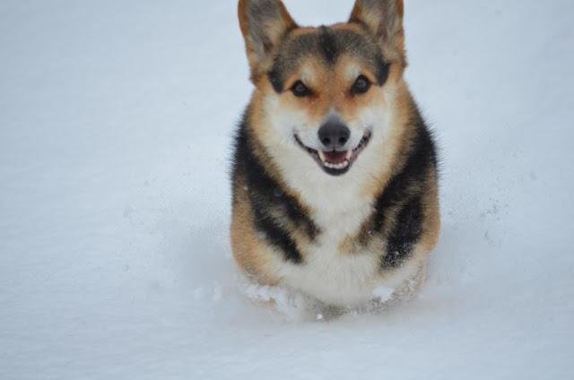 Snow Bob