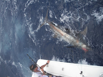 North Drop Blue Marlin
