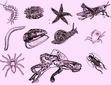 Pengertian Invertebrata dan Ciri Invertebrata