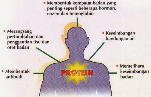 wong jowo: Metabolisme Protein - Makanan Tinggi Protein ...