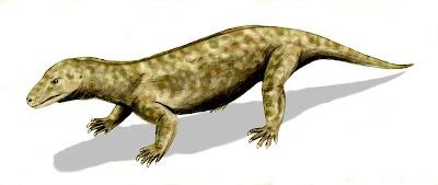 therapsidae Procynosuchus