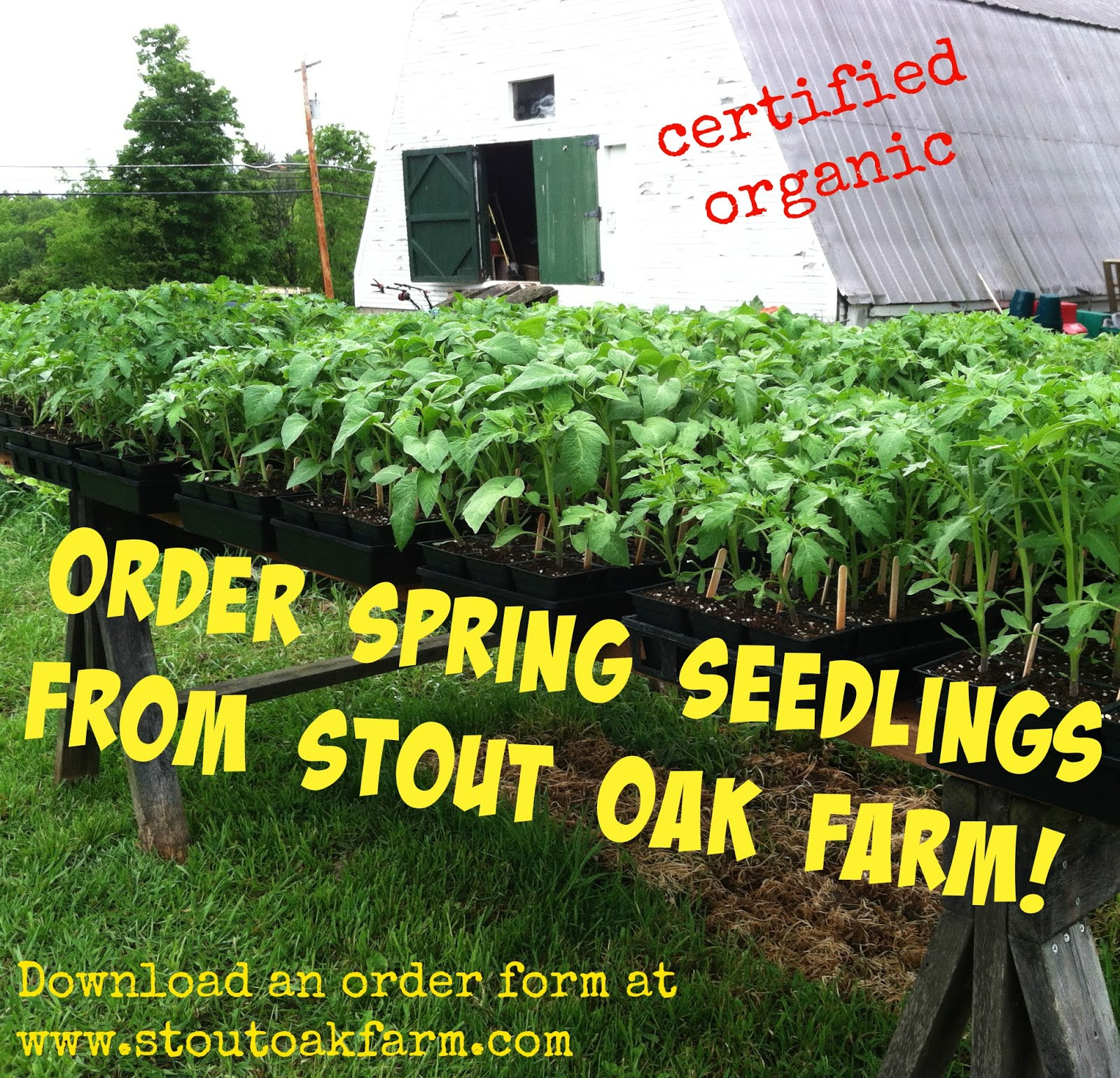 pre-order seedlings for your garden