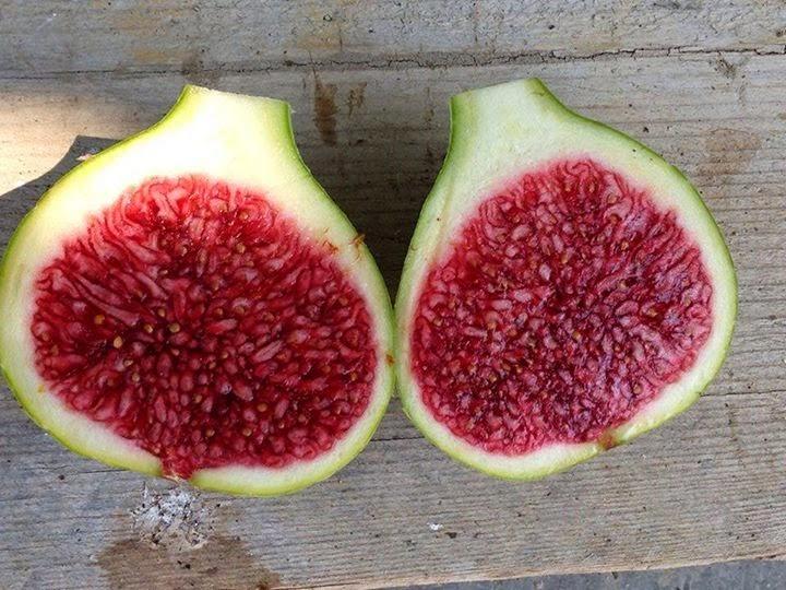 Figs : Col de Dame Blanc