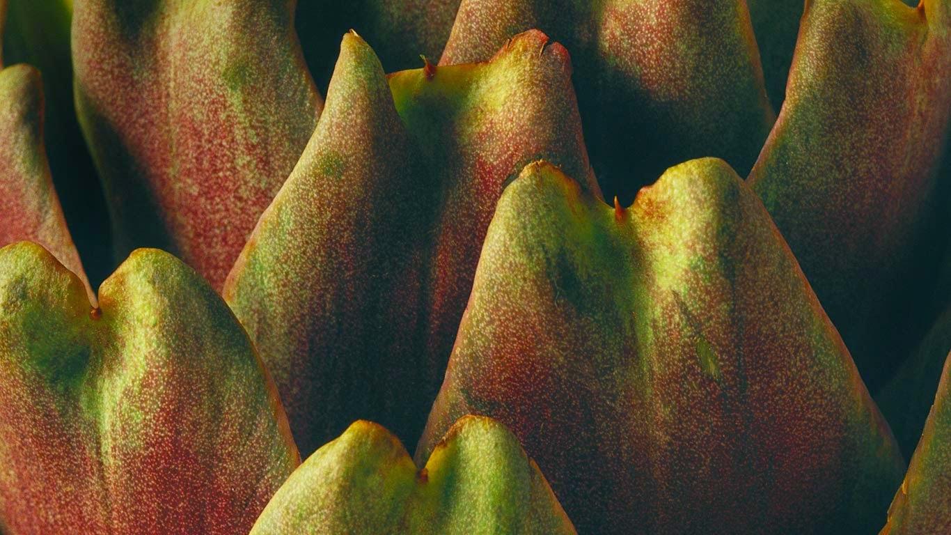 Close-up of an artichoke (© I. Rozenbaum & F. Cirou/Alamy) 14