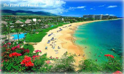 Hawaii is the largest island of the United States