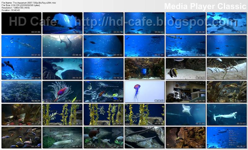 The Aquarium video thumbnails