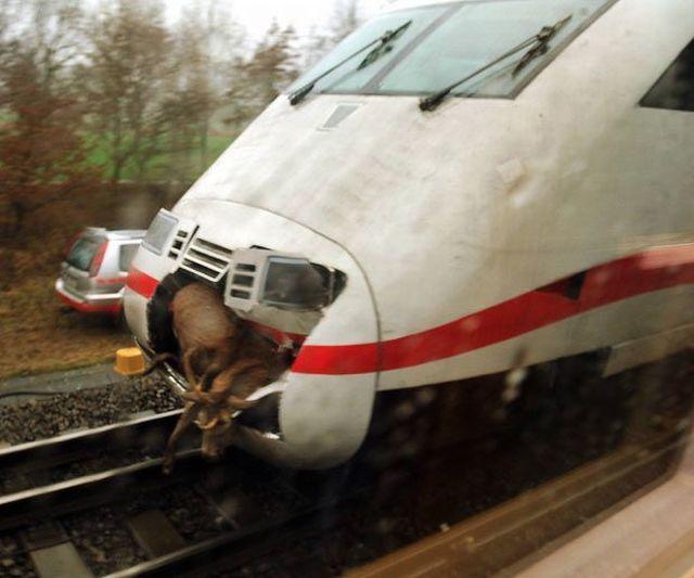 Goat vs. Train