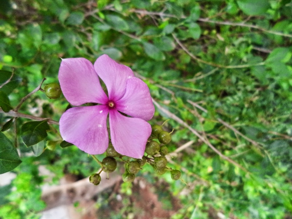 Beautiful bright pink colored flower