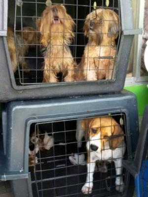 Cães foram apreendidos na região norte da capital (Foto: Divulgação/Prefeitura de Curitiba)