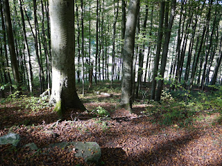 Bild 5: Blick vom Gelände der ehemaligen Karlsburg hinunter zum Forsthaus Mühltal