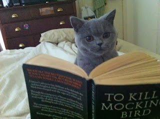 cat, reading, to kill a mockingbird, book, harper lee