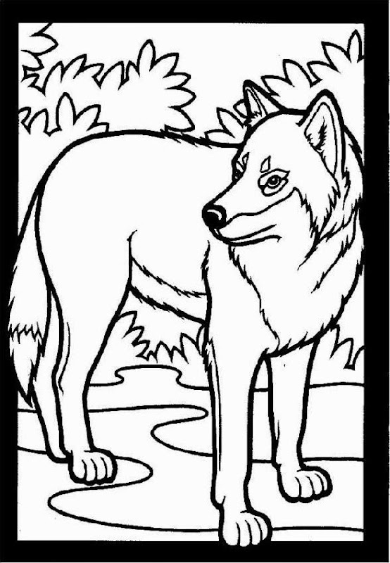Wolf coloring pictures free coloring pictures for Grey wolf coloring pages