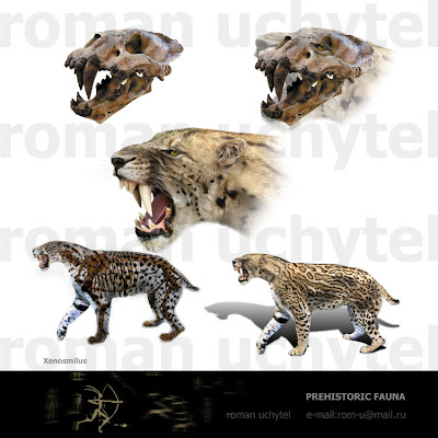 felidae fosil Xenosmilus