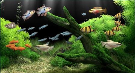 Dream Aquarium Screensaver Full Activation 10 Mb