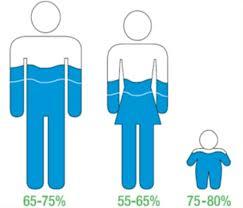 Litri di acqua nel corpo umano