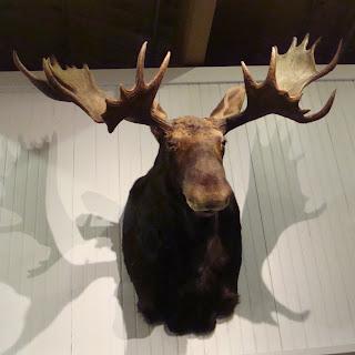 L.L.Bean Moose