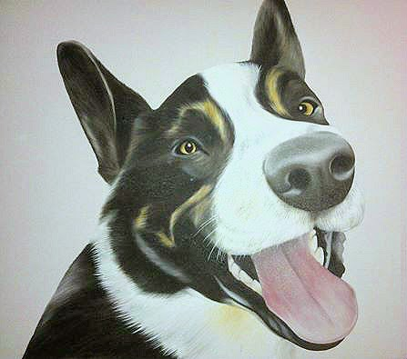 Jed, pet portrait by Lucy Tidbury of a border collie
