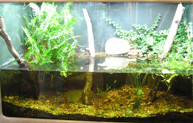My fresh water aquarium natural planted tank walstad for Natural fish tank