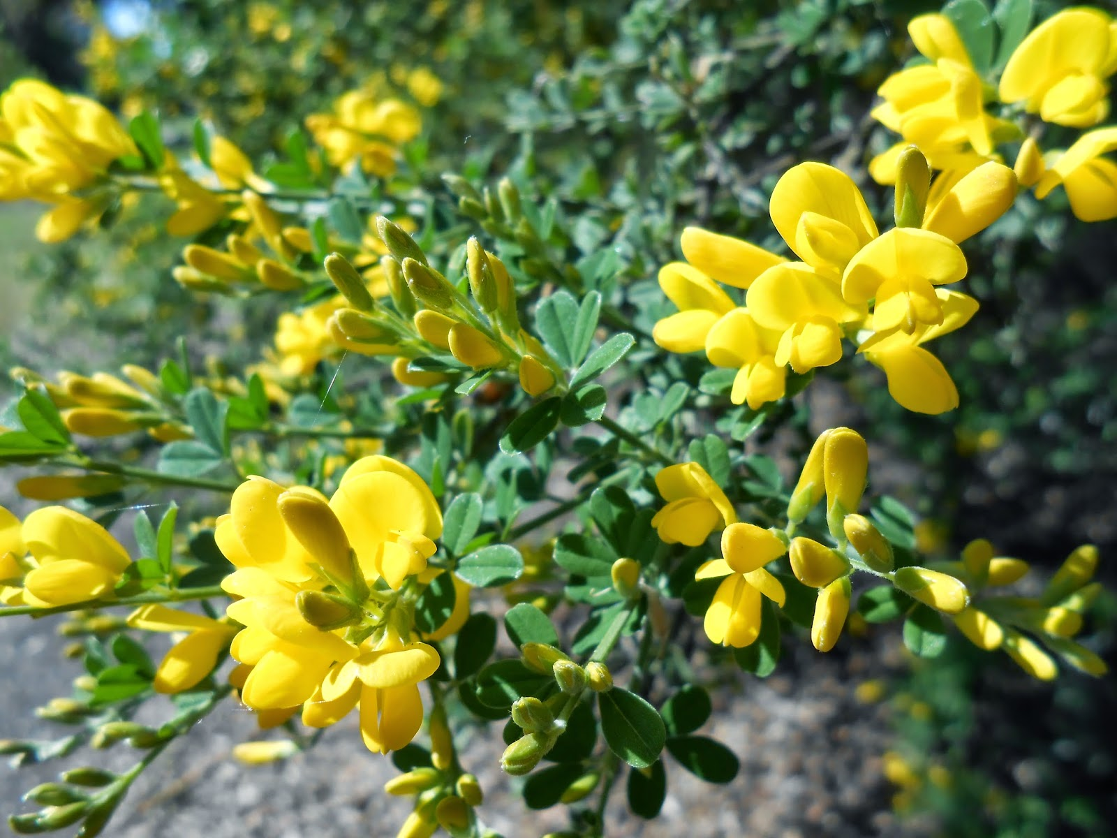 blooming, love, yellow flowers, spirituality photo, spiritual awakening image,