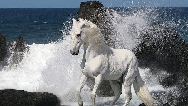White Horse And Sea Beautiful Desktop Wallpaper