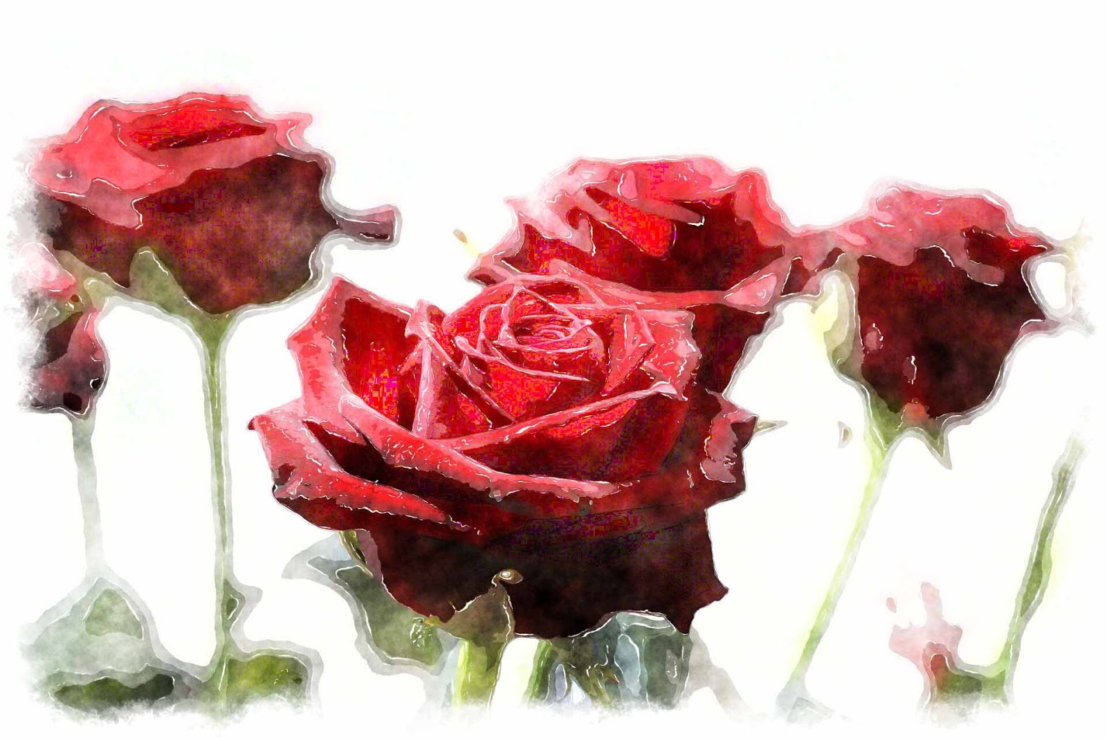 Rose painting hd wallpapers for How to paint a rose watercolor