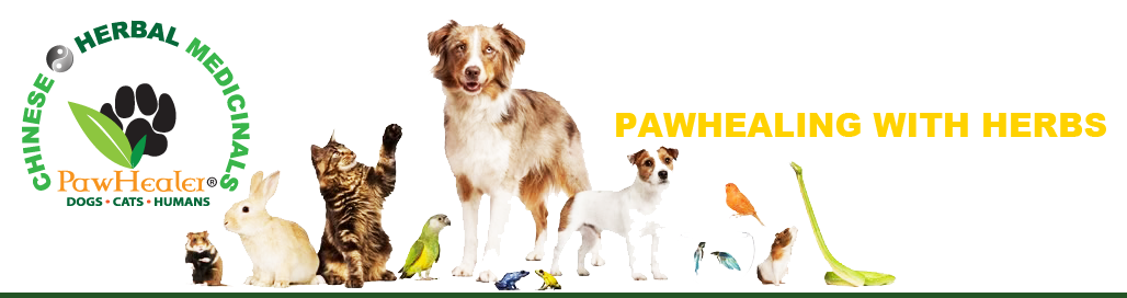 PawHealer®  Picture Blog