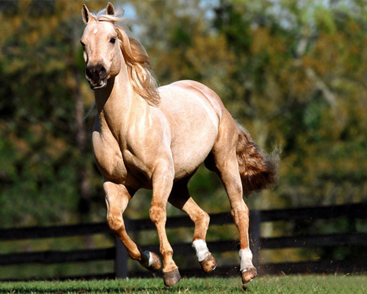 http://1.bp.blogspot.com/-52tqouEuDZQ/TgjRJCXUynI/AAAAAAAAABc/YfJ5gzl-yQo/s1600/wallpapers-horses-2.jpg