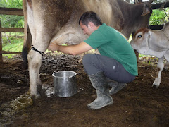 Milking a Cow!!