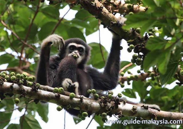 Taman Negara Malaysia  city photos : يعد تامان نيجارا المنتزه الوطني أول ...