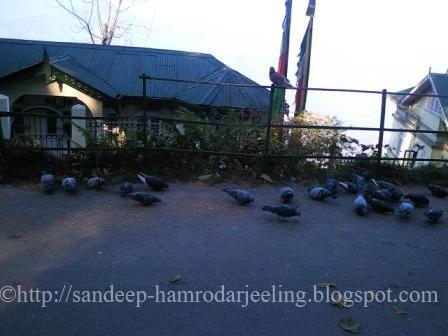 Birds Darjeeling