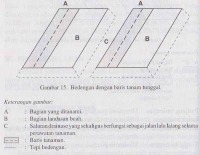 Bedengan dengan garis tanam tunggal