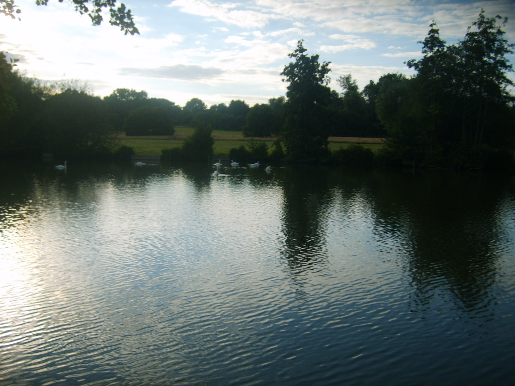 staw jeziorko new pond, earlswood lakes