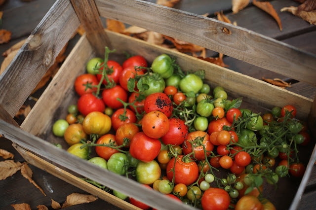 suppe aus feuerger steten tomaten ziiikocht. Black Bedroom Furniture Sets. Home Design Ideas