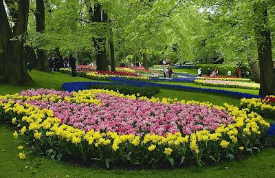 голланди- цветы-фото