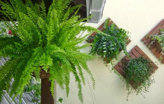 plantas jardim vertical meia sombra : plantas jardim vertical meia sombra:planta é própria para interiores, pois necessita de cultivo à meia