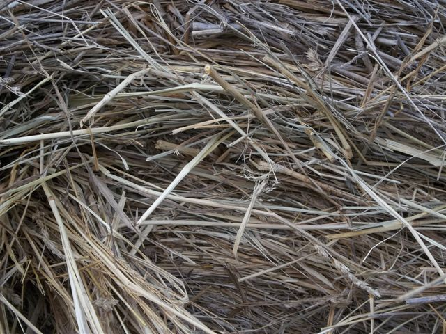 White House Farms: Special Cow Hay Orchard Fescue 4X5' bales!