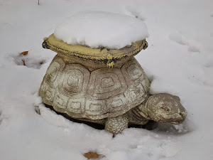 Turtle in the Snow