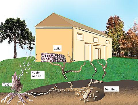 Pegada ambiental tratamento da madeira contra t rmitas - Como acabar con las ratas en mi casa ...
