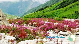 جمال الزهور في الهند