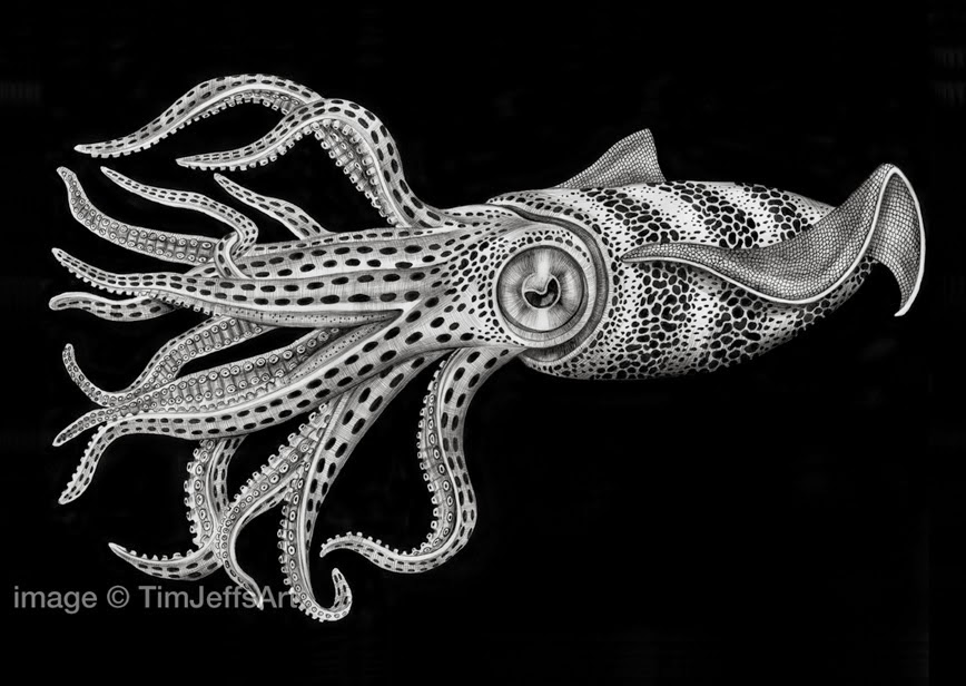 09-Squid-Tim-Jeffs-All-Creatures-Great-and-Small-Ink-Drawings-www-designstack-co