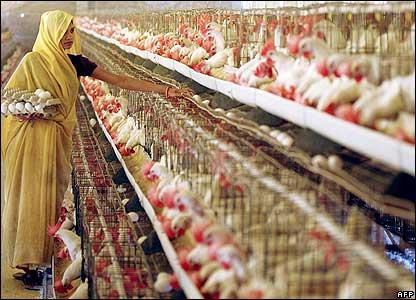 В будущем году птицеводство Индии может показать двузначные темпы роста