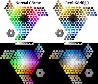 Renk Körlüğü ve Renkler, Renk Körlüğünde Renkler Nasıl Görünür