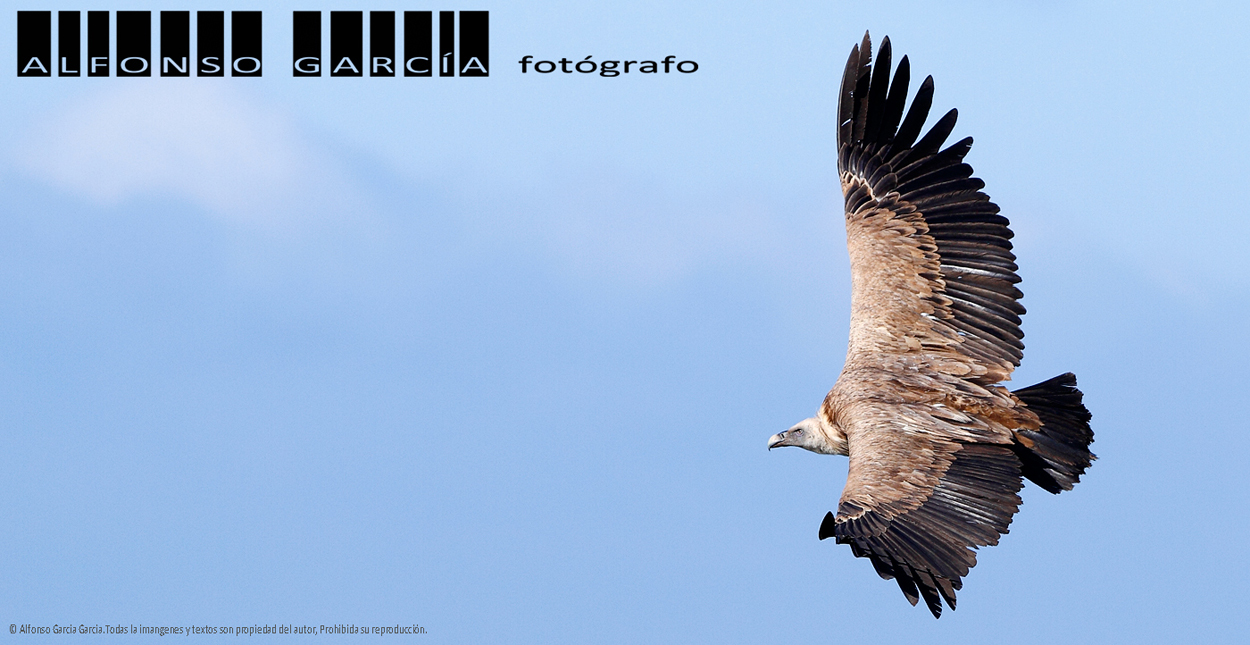 ALFONSO GARCIA. Fotógrafo.