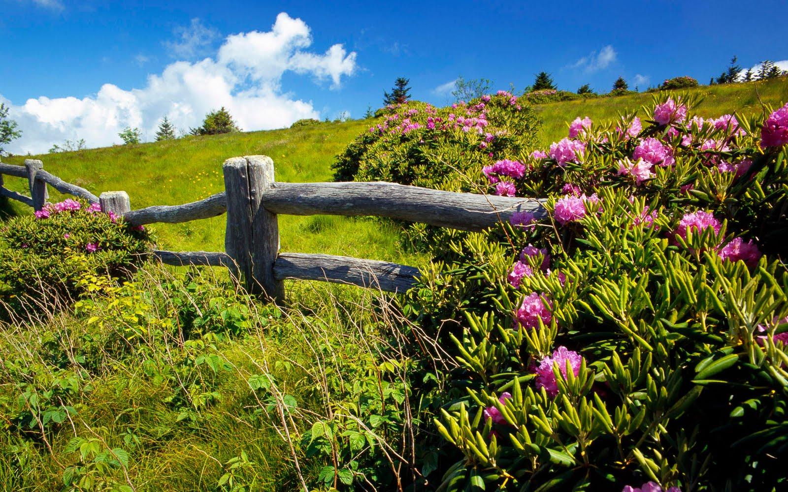 http://1.bp.blogspot.com/-55qXsxeJ8Go/Tg8rkIxTkxI/AAAAAAAAKlE/si0sUguQWX4/s1600/nature%2Blandscapes%2B%2Bhd%2Bwallpapers%2B117.jpg