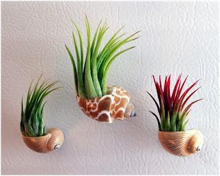 Tillandsia planta aerea decoração plantas diferentes
