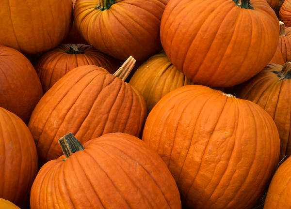 how to make pumpkin extract