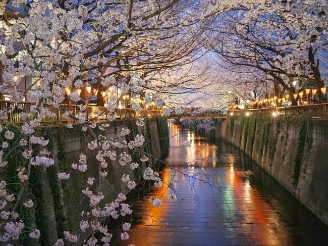 Накамегуро в Токио является одним из самых известных мест для любителей насладиться цветущей вишней. © Джованни Паскарелла