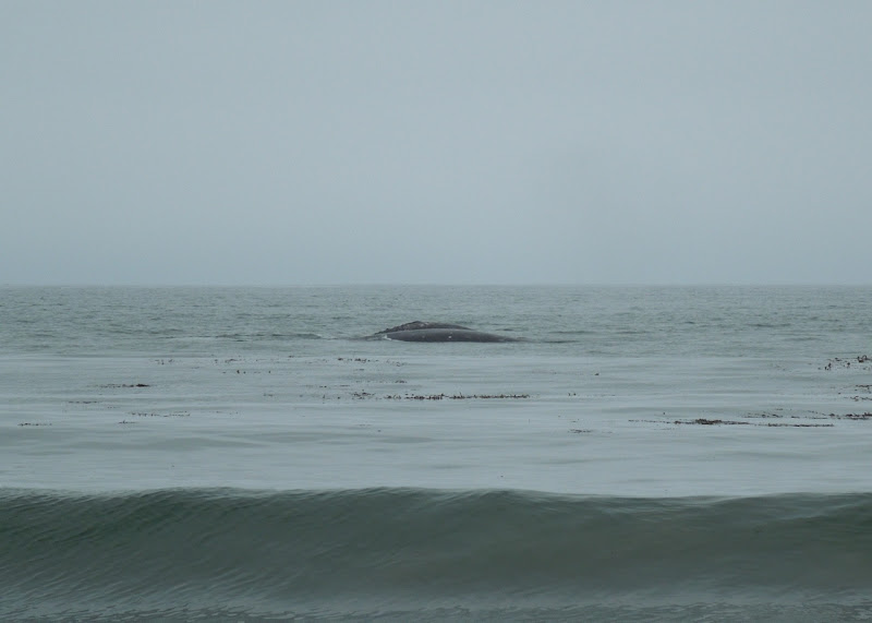 Whale sighting Hendry's Beach