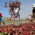 """NOMBRE OFICIAL AÑO 2013 PERÚ: """"Año de la Inversión para el Desarrollo Rural y la Seguridad Alimentaria"""" Presidencia del Consejo de Ministros - www.pcm.gob.pe"""