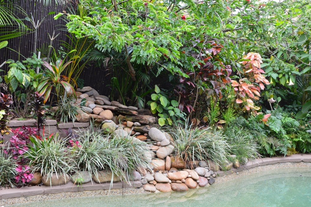 The Plants On Right Side Of Waterfall This Section Garden Still Has A Lot Growing To Do There Were Large Chamaedorea Cataractarum